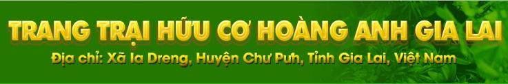 Dien Co Thu Duc